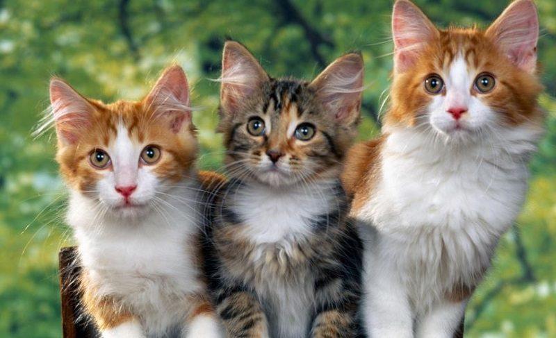 Con mèo số mấy? Mơ thấy mèo đánh con gì chuẩn?